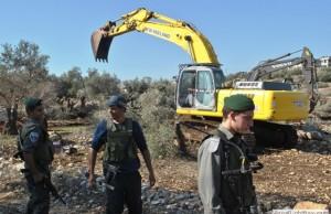 الاحتلال يقلع أشجار الزيتون